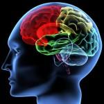 مغز خودآگاه و ناخودآگاه